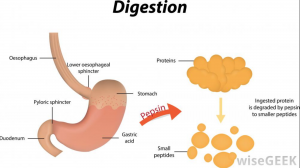 get rid of bloating with better digestion